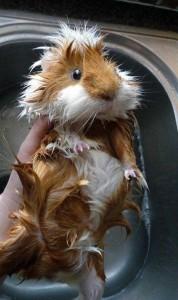 Adorable Photos of Animals Taking a Bath (68 photos) 26