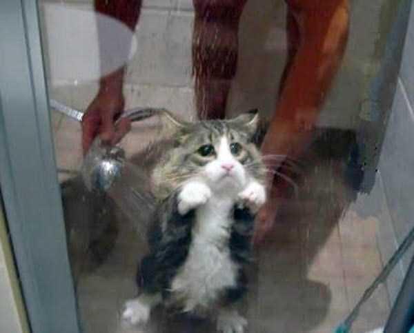 animals-taking-bath (29)