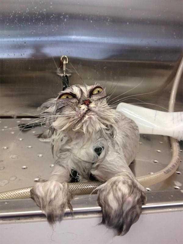 animals-taking-bath (30)
