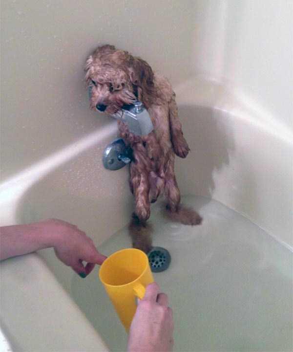 animals-taking-bath (31)