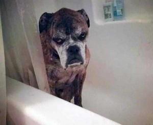 Adorable Photos of Animals Taking a Bath (68 photos) 32