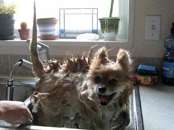 animals-taking-bath (33)