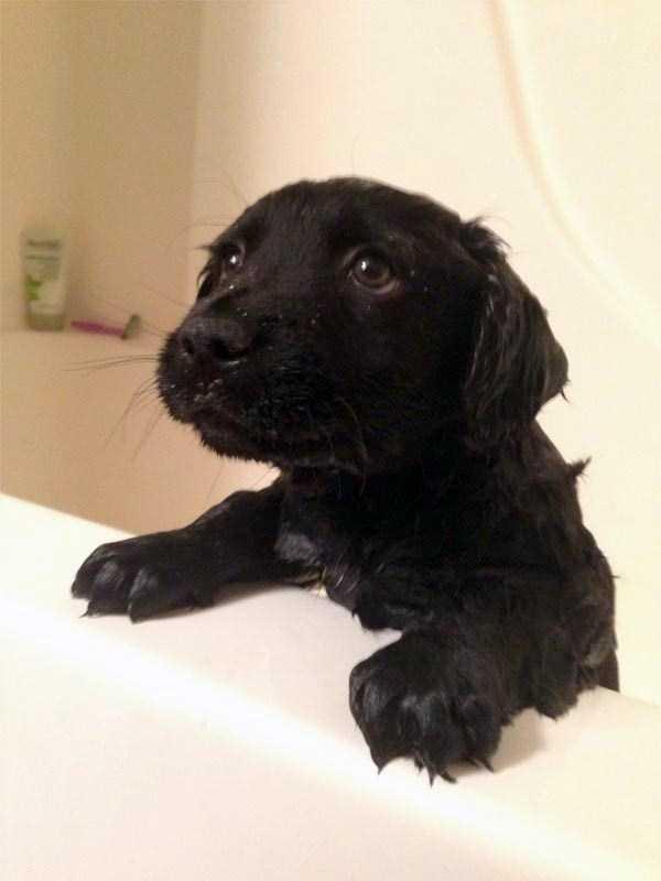 animals-taking-bath (34)