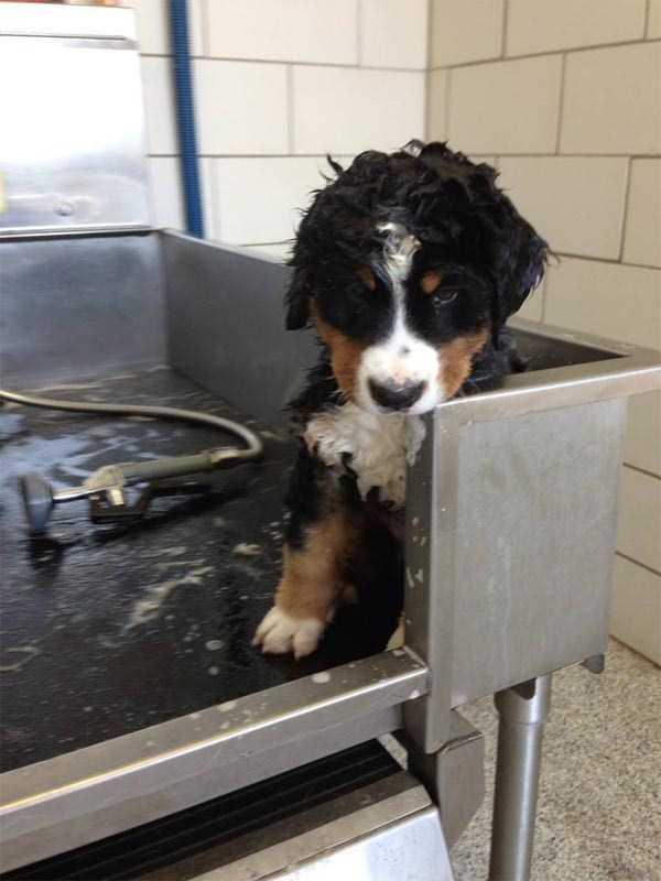 animals-taking-bath (37)