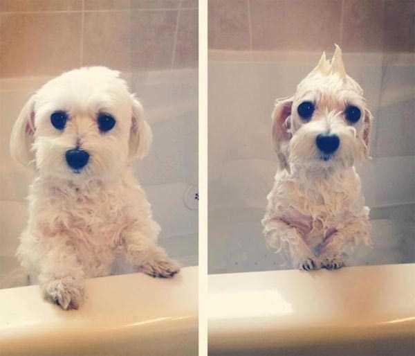 animals-taking-bath (39)
