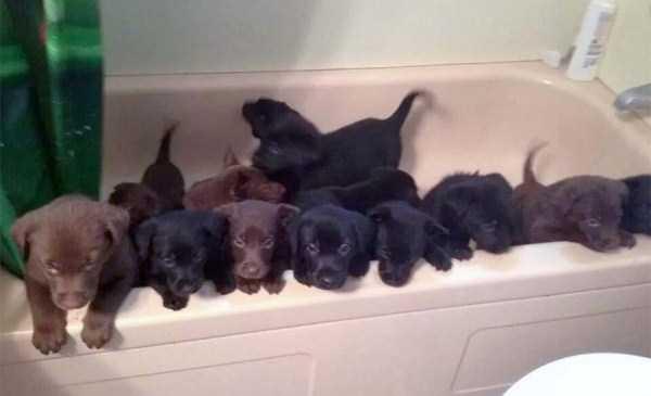 animals-taking-bath (4)