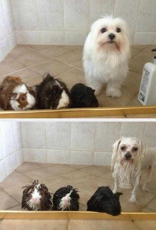 animals-taking-bath (40)