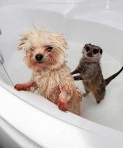 Adorable Photos of Animals Taking a Bath (68 photos) 45