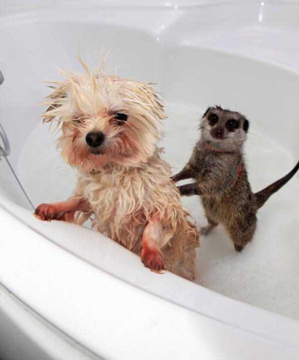 animals-taking-bath (45)
