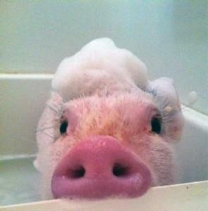 Adorable Photos of Animals Taking a Bath (68 photos) 48