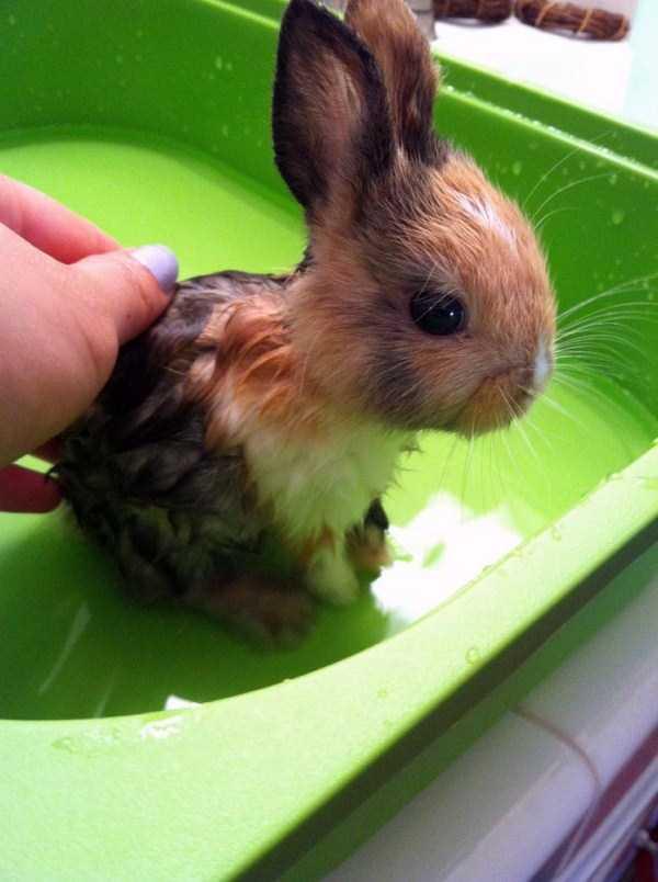 animals-taking-bath (49)