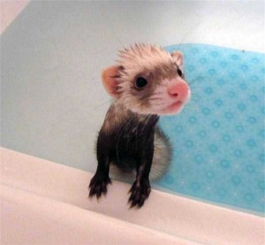 Adorable Photos of Animals Taking a Bath (68 photos) 5