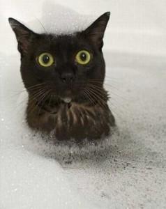 Adorable Photos of Animals Taking a Bath (68 photos) 50