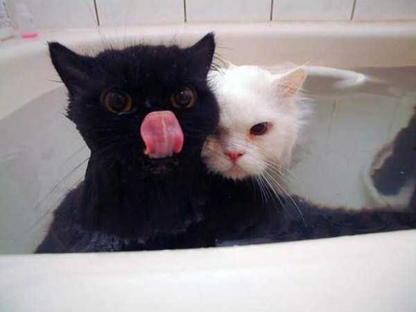 animals-taking-bath (51)