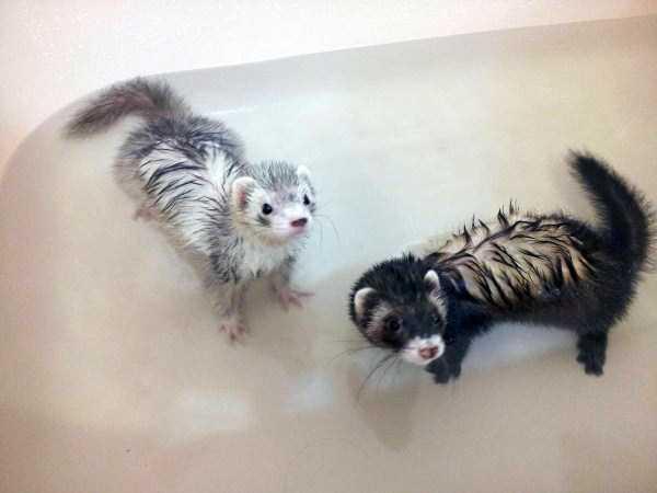 animals-taking-bath (52)