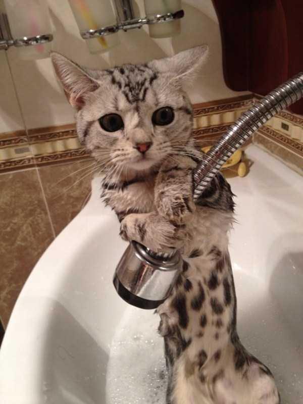 Adorable Photos of Animals Taking a Bath (68 photos