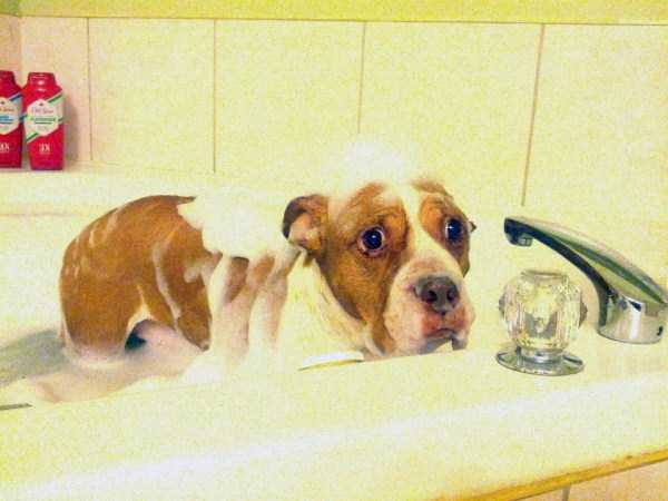 animals-taking-bath (57)