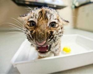 Adorable Photos of Animals Taking a Bath (68 photos) 60