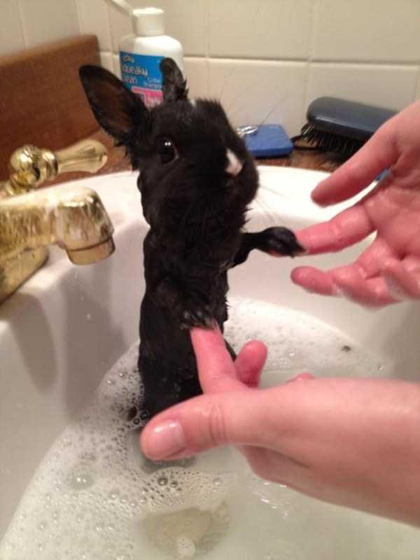 animals-taking-bath (62)