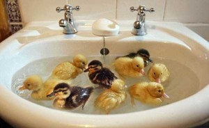 Adorable Photos of Animals Taking a Bath (68 photos) 64