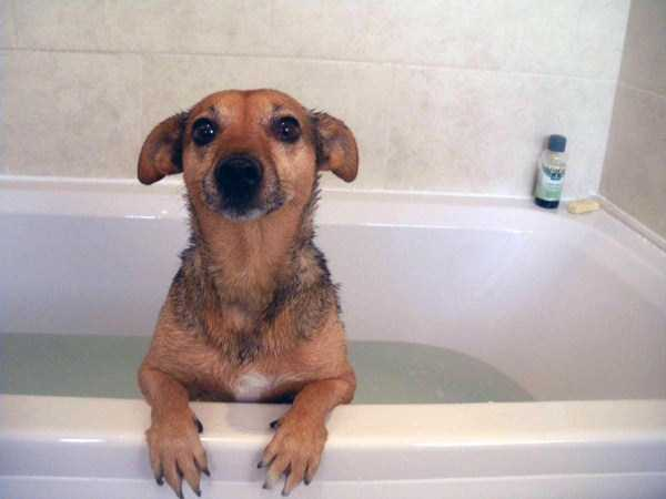 animals-taking-bath (65)
