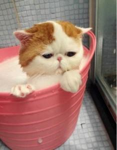 Adorable Photos of Animals Taking a Bath (68 photos) 67
