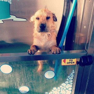 Adorable Photos of Animals Taking a Bath (68 photos) 7