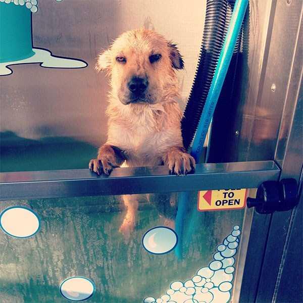 animals-taking-bath (7)