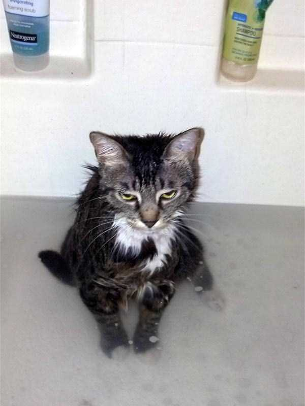 animals-taking-bath (9)