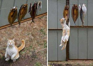 Unwary Cats Caught Stealing (38 photos) 12