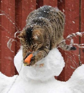 Unwary Cats Caught Stealing (38 photos) 17
