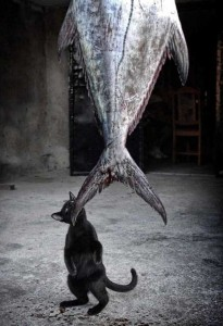 Unwary Cats Caught Stealing (38 photos) 18