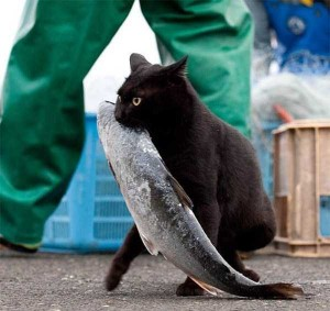 Unwary Cats Caught Stealing (38 photos) 21