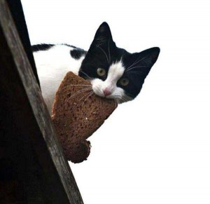 Unwary Cats Caught Stealing (38 photos) 29