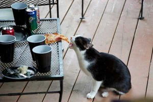 Unwary Cats Caught Stealing (38 photos) 3