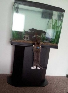 Unwary Cats Caught Stealing (38 photos) 36