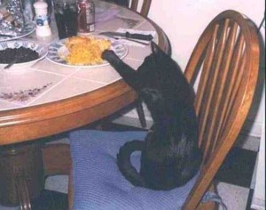 Unwary Cats Caught Stealing (38 photos) 37