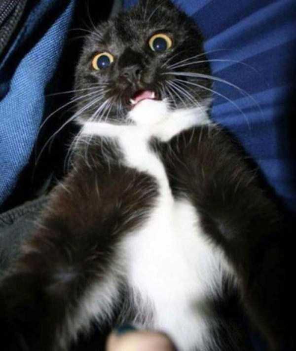 cats-selfies (1)
