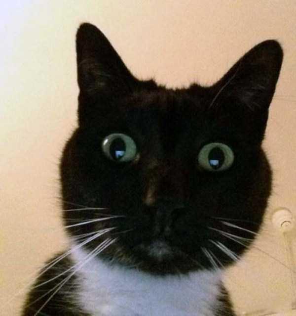 cats-selfies (11)