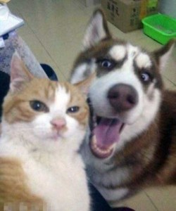 Charming Cats Taking Selfies (38 photos) 12