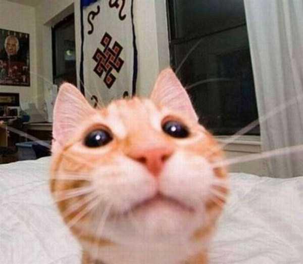 cats-selfies (15)