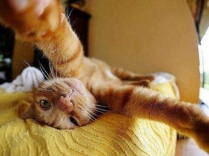 Charming Cats Taking Selfies (38 photos) 18