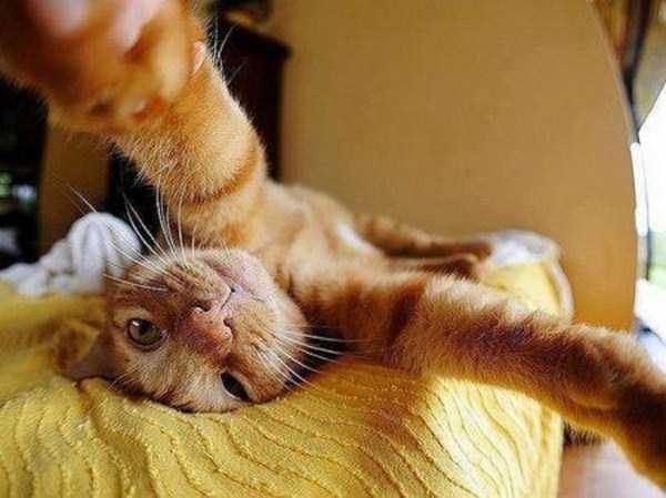 cats-selfies (18)