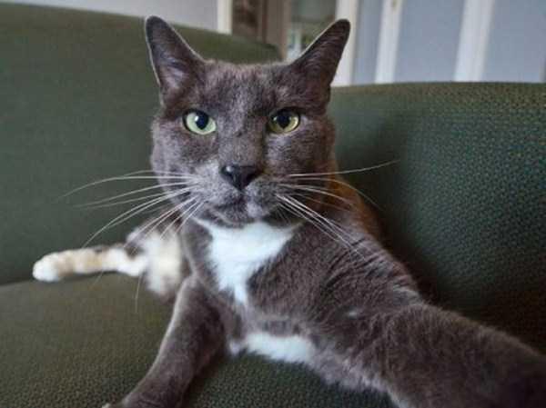 cats-selfies (19)