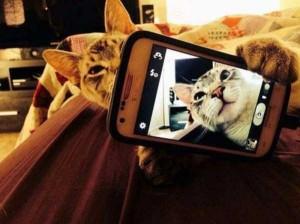 Charming Cats Taking Selfies (38 photos) 2