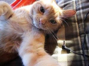 Charming Cats Taking Selfies (38 photos) 20