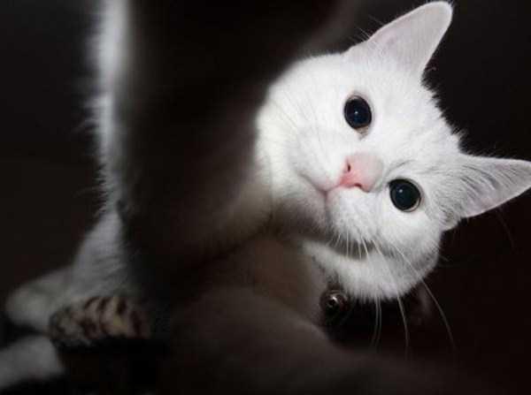 cats-selfies (22)