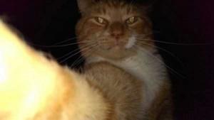Charming Cats Taking Selfies (38 photos) 23