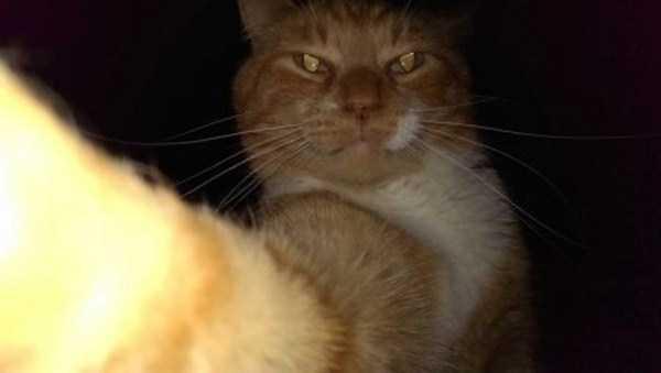 cats-selfies (23)