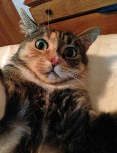 Charming Cats Taking Selfies (38 photos) 24